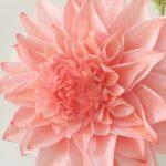 Peach Dahlia sugar flower